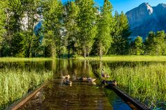 Meadow with flooded boardwalk in Yosemite. National Park Valley. California, USA Stock Photo