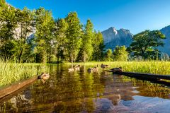 Meadow with flooded boardwalk in Yosemite. National Park Valley. California, USA Stock Photography
