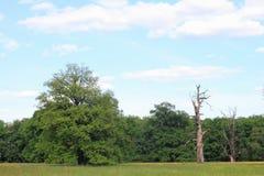 Meadow in a floodplain Stock Image