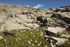 Meadow in flower Stock Photo