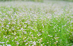 Meadow and flower bed in natural park Royalty Free Stock Photos