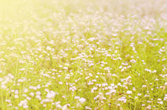 Meadow and flower bed in natural park Royalty Free Stock Image