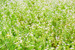 Meadow and flower in natural park Royalty Free Stock Photo