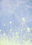 Meadow flower pale blue background Royalty Free Stock Images