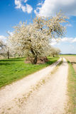 Meadow with flowering fruit trees Stock Images