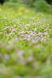 Meadow & flowers Royalty Free Stock Images