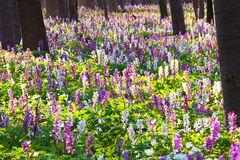 Meadow flowers Stock Image