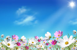 Meadow of flowers. Meadow of colorful flowers in the sun Stock Images