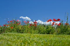 Meadow with flowers Royalty Free Stock Images