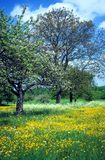 Meadow with flowers 4 royalty free stock image