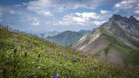 Meadow with flowers in Allgau Alps. Of Bavaria, Germany Royalty Free Stock Image