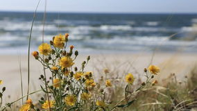 Meadow flowers at the background of day waves seascape. Meadow flowers at background of day waves seascape stock footage