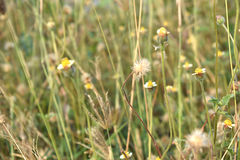 Meadow flowers background landscape, fields & meadows. Meadow flowers background landscape fields & meadows Stock Photos