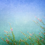 Meadow flowers background Stock Images