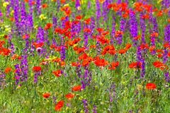 Meadow flowers. Background of a spring field. Royalty Free Stock Photos