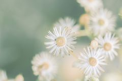 Meadow flowers, beautiful fresh morning in soft warm light. Vintage autumn natural background. royalty free stock images