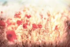Meadow flowers - beautiful meadow Royalty Free Stock Photo