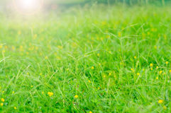 Meadow and flowers bokeh Royalty Free Stock Image