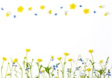 Meadow flowers with field buttercups and pansies isolated on white background. Top view with copy space. Flat lay stock photography