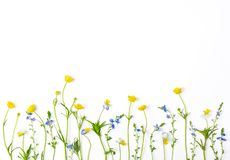 Meadow flowers with field buttercups and pansies isolated on white background. Top view with copy space. Flat lay royalty free stock photos