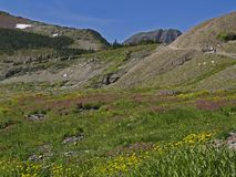 Meadow of Flowers, Goats and Hikers. This image of the flowers in the meadow with the goats and hikers in the background was taken in Glacier National Park Stock Photography