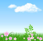 Meadow flowers on the sky background. Meadow flowers, grass on the sky background and clouds Stock Image