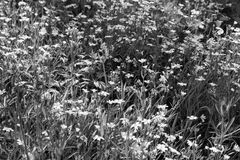 Meadow with flowers and grass Stock Photos