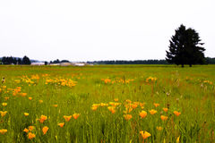 Meadow with flowers and grass and tree silhouette Stock Photography
