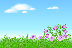 Meadow flowers with green grass Royalty Free Stock Photo