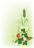 Meadow flowers and herbs. Meadow flowers, herbs and strawberries, vector illustration Royalty Free Stock Photography