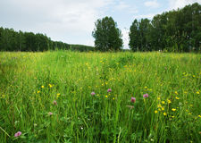 Meadow with flowers and high grass Stock Image