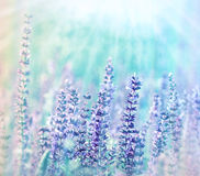 Free Meadow Flowers Illuminated By Sunlight Royalty Free Stock Photos - 38010278