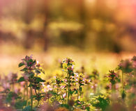 Meadow flowers illuminated by sunlight Stock Image