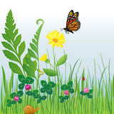 Meadow Flowers and Insects/eps. Illustration of a detailed meadow scene with grasses, ferns, insects and a four-leaf clover for luck vector illustration