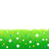 Meadow with flowers isolated on white background. Summer, spring vector illustration featuring lush meadow with colorful flowers isolated on white background Stock Photos