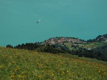 Meadow With Flowers And Lake Royalty Free Stock Images
