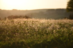 A meadow of flowers. In the last light of the sun Royalty Free Stock Images