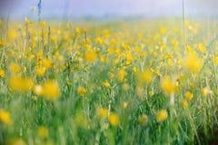 Meadow flowers lit by sun rays Stock Photo