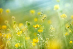 Meadow flowers lit by sun rays. In spring Royalty Free Stock Images