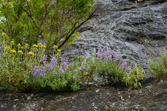 Meadow flowers of Montenegro. Meadow flowers with rocks on a background Royalty Free Stock Images