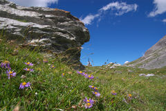 Meadow flowers in mountains Stock Image