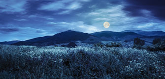 Meadow with flowers in mountains at night Stock Photos