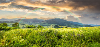 Meadow with flowers in mountains at sunrise stock photos