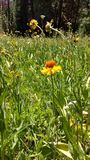 Meadow flowers Royalty Free Stock Images