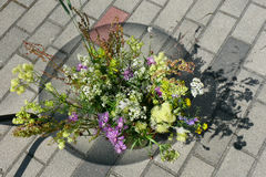Meadow flowers. And paver Stock Images