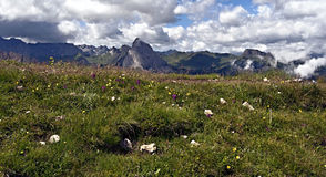 Meadow with flowers and peaks panorama in Dolomites Royalty Free Stock Image