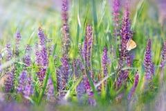 Meadow flowers - purple flowers Stock Image