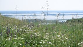 Meadow with flowers with river on background. Meadow with many flowers including yarrow, sage, plantain with Dnepr river panorama on background and islands in stock video