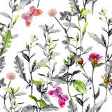 Meadow flowers. Seamless herbal background in black-white colors. Watercolor. Meadow flowers, grass, herbs. Seamless herbal background in black and white colors Stock Photos
