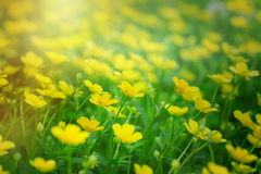 Meadow flowers in spring Stock Photography